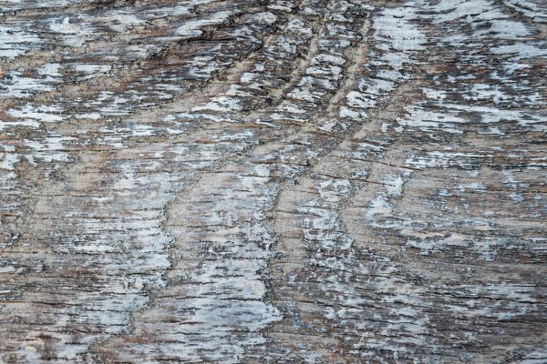 Whitewash NeverWood Planks